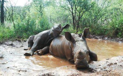 Steun het Rhino Orphanage